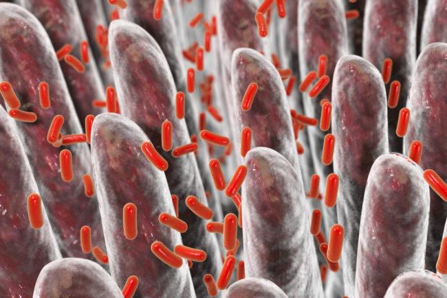 microbiota-e1560671254512.jpg